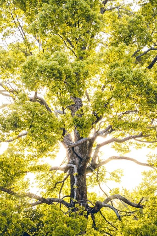Wat gebeurt er met onze bomen?
